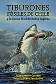 TIBURONES FOSILES DE CHILE